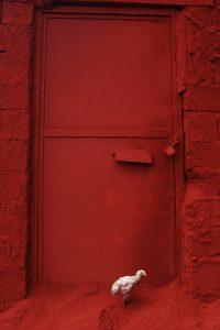 Chicken B Size45cm30cm Year2014 Edition 5 200x300 - RED DREAM Photos