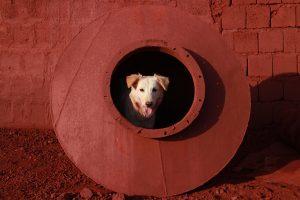 Dog Size45cm30cm Year2014 Edition 5 300x200 - RED DREAM Photos