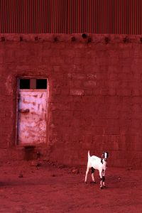 Goat Size45cm30cm Year2014 Edition 5 200x300 - RED DREAM Photos