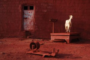 Goat Size45cm30cmYear2014Edition5 300x200 - RED DREAM Photos