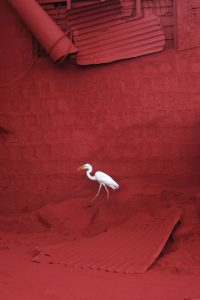 Heron A Size45cm30cm Year2014 Edition 5  200x300 - RED DREAM Photos