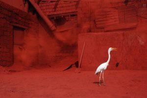 Heron B Size45cm30cm Year2014 Edition 5 300x200 - RED DREAM Photos