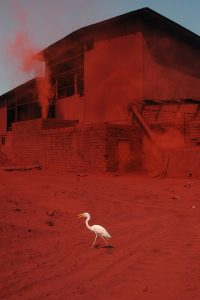 Heron C Size45cm30cm Year2014 Edition 5 200x300 - RED DREAM Photos