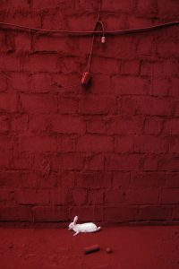 Rabbit A Size45cm30cm Year2014 Edition 5 200x300 - RED DREAM Photos